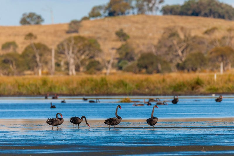 Bird watching in Glen Innes Highlands